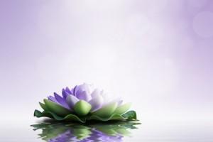 Zen concept. Purple lotus on purple background.