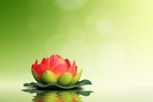 Spa concept. Red lotus flower on green background.